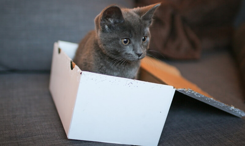 Thinking inside the box: workplace inspiration from my cat